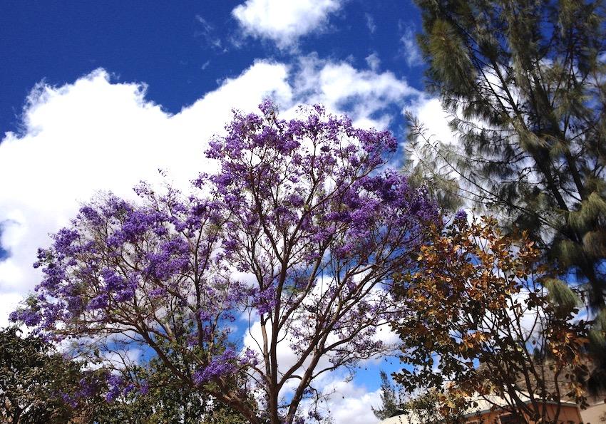 Una delle foto più belle che ho, per me, quella di un albero vicino a casa, ad Iringa.